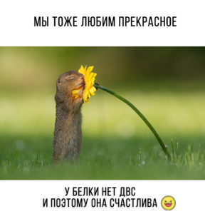 фотограф заснял белку с цветком dickvanduijn